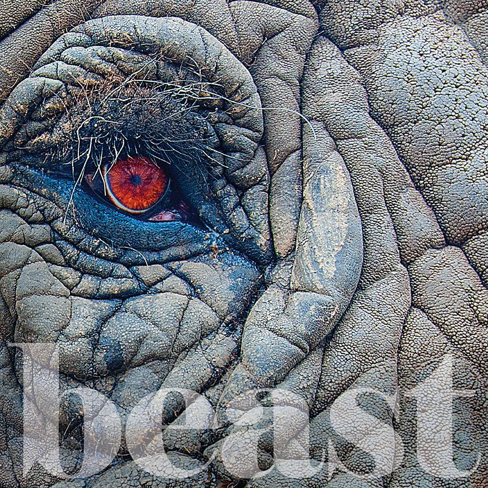 Beast album